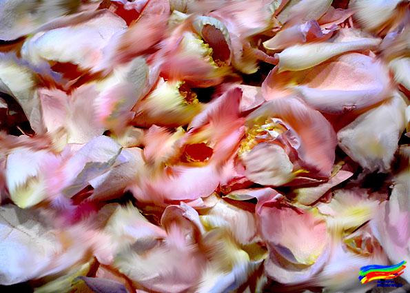 Rosenblätter (© Dorisa-Karten)
